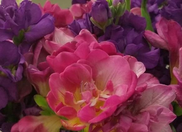 Pink freesias